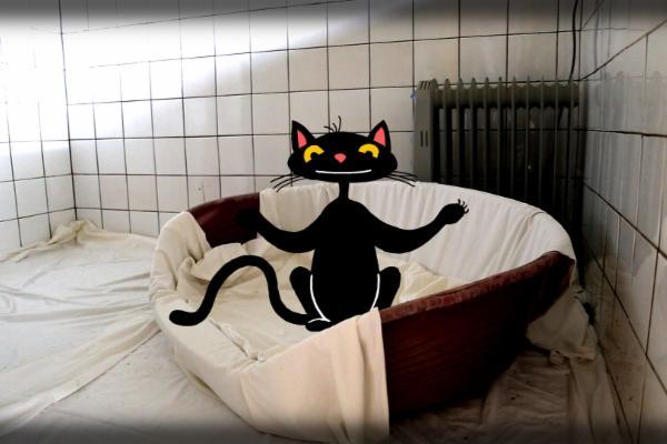 Mladé černé chlupaté kočička fotky