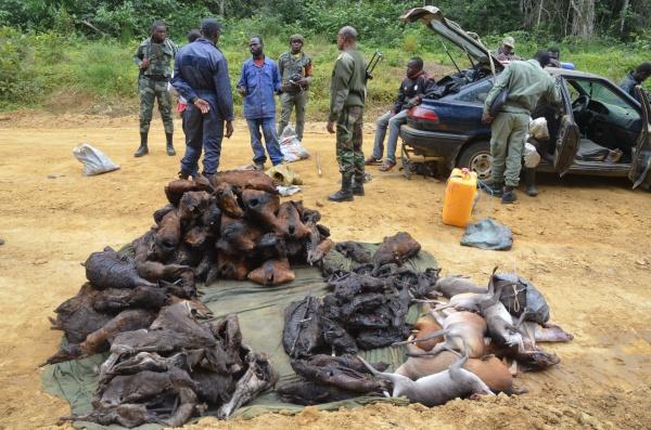 Nalezený bushmeat