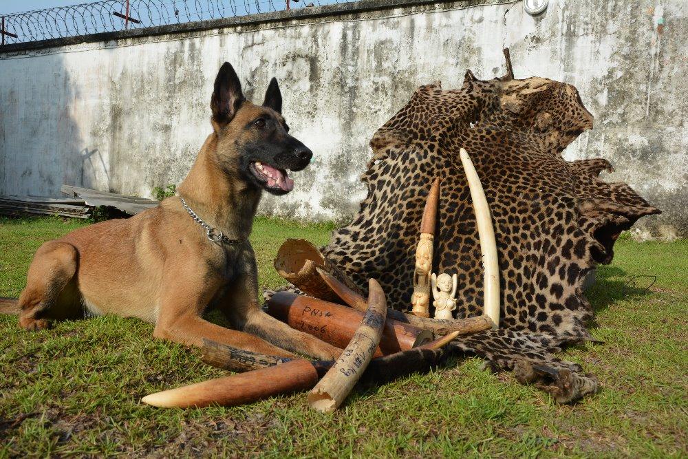 Cama, bojovnice za ohrožené druhy