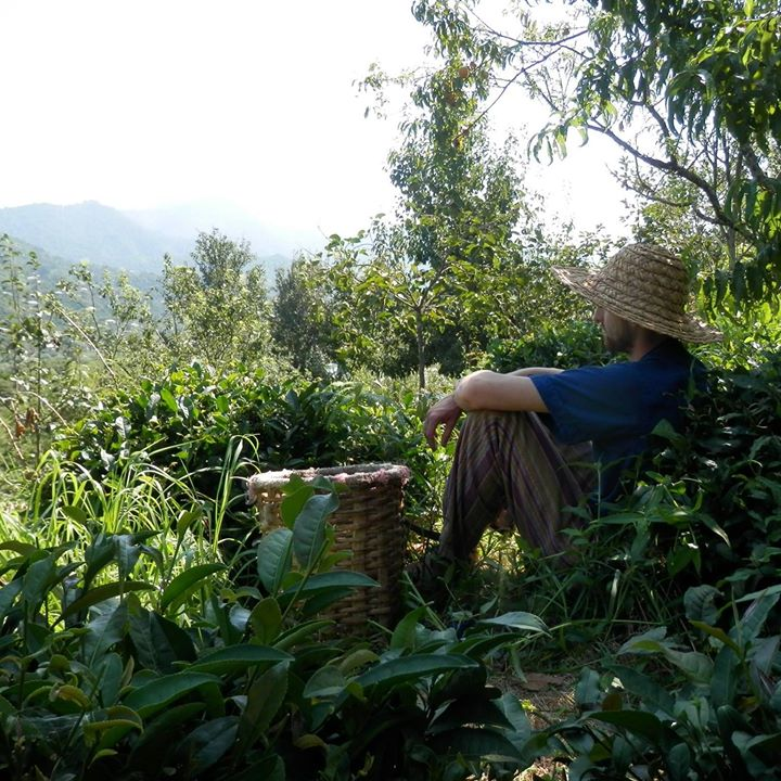 Prostě jen tak odpočíváš mezi čaji... (Kuba na Zahradě, 2017)