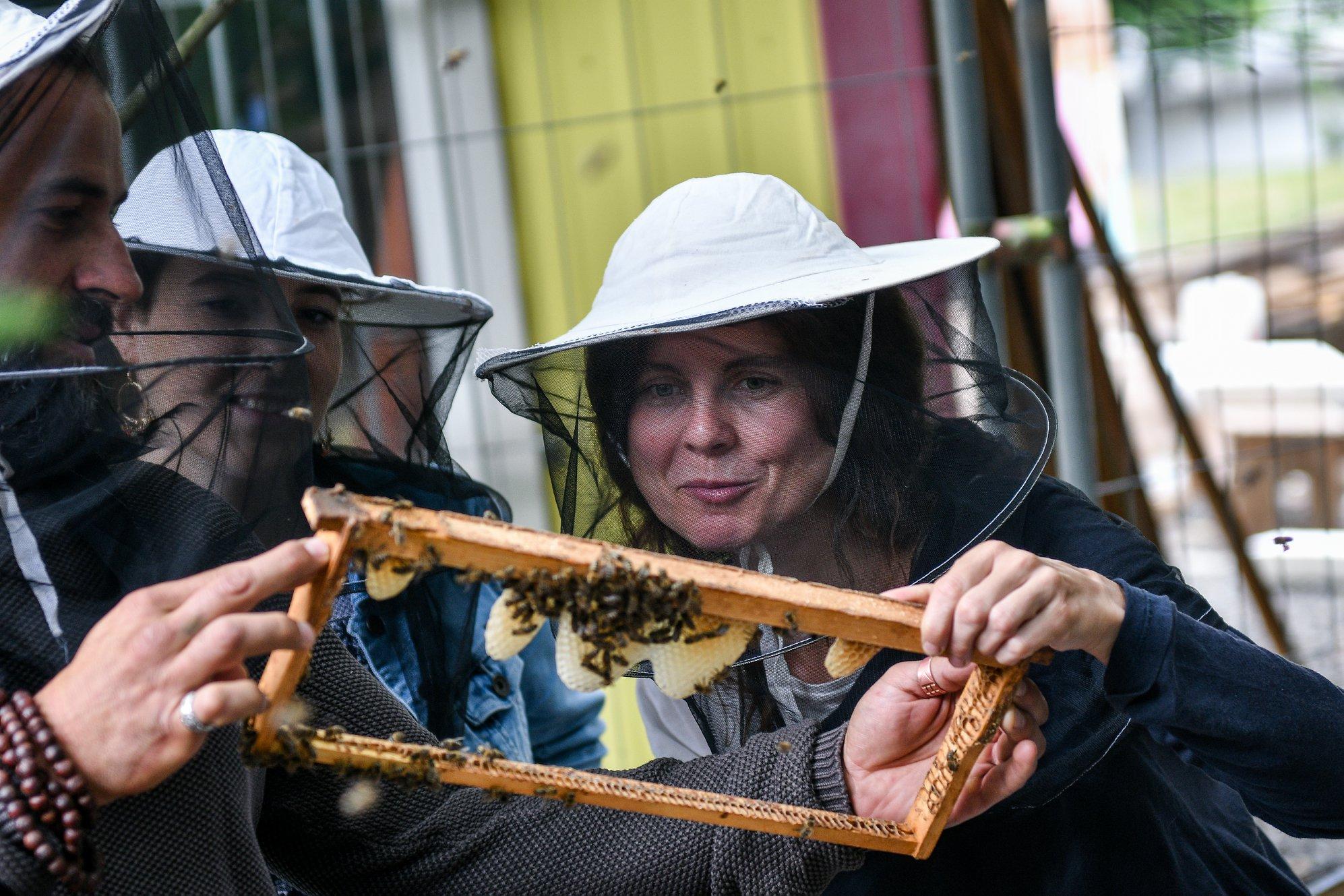 Pozorování včel - kurz ekologického včelaření
