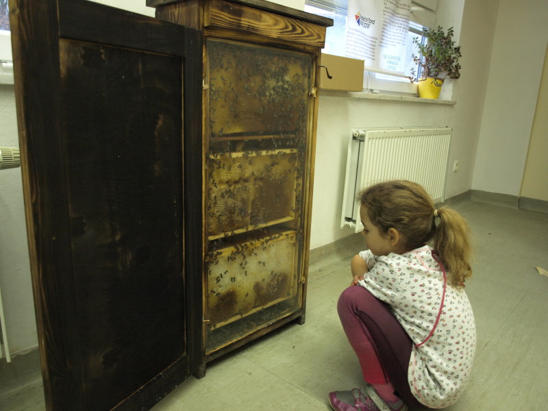 Výstava TAJEMSTVÍ VČEL - pozorování živého včelstva