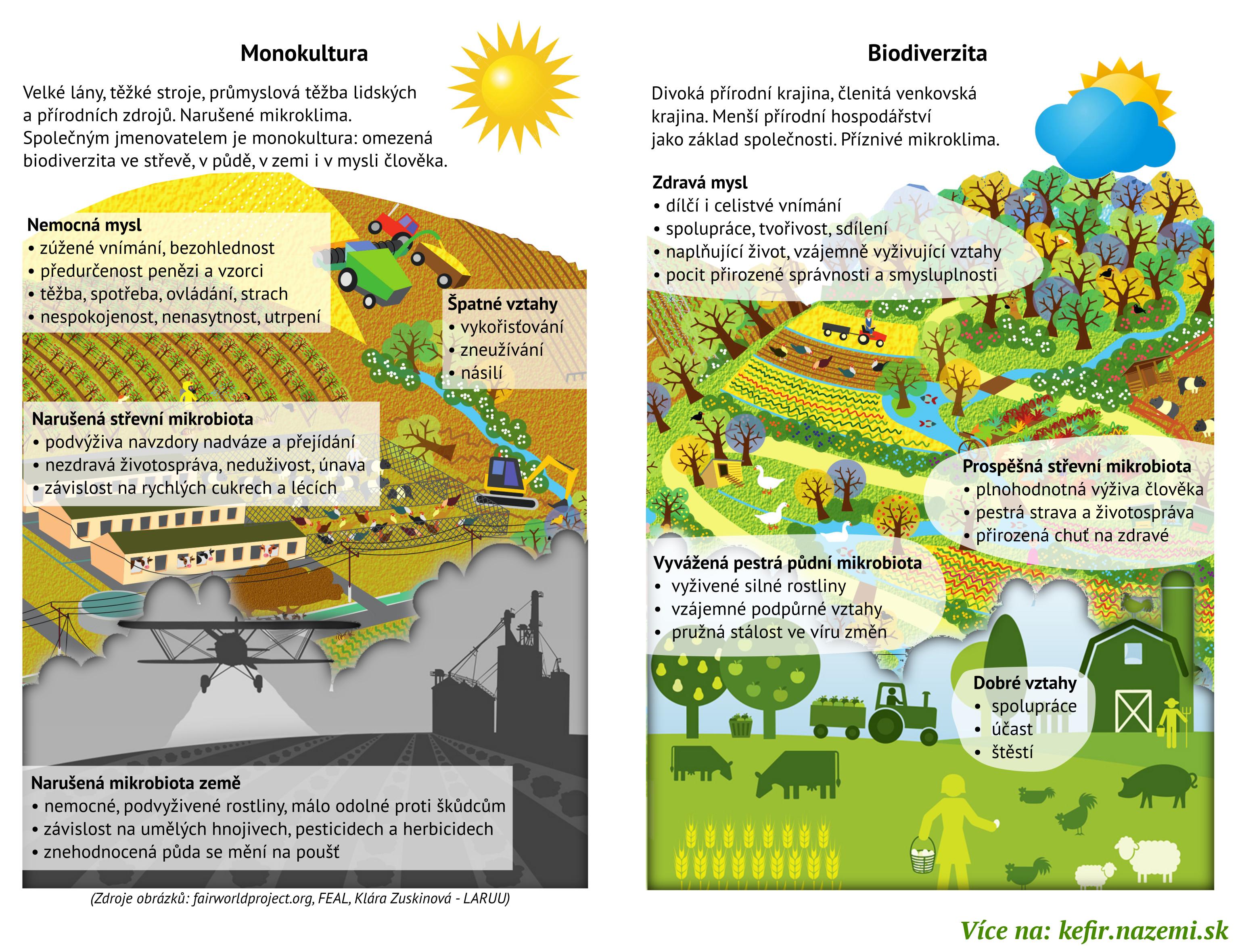 Infografika: Monokultura a Biodiverzita